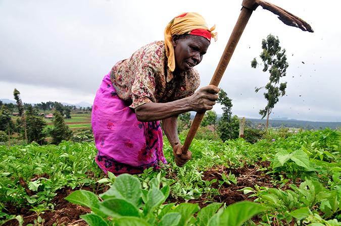 A farmer at work in Kenya's Mount Kenya region © CIAT / Neil Palmer
