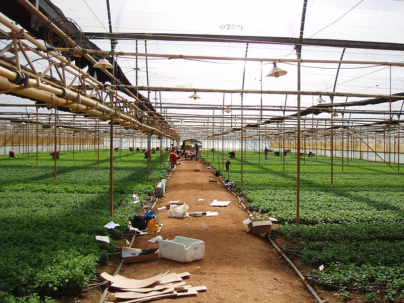 Flower farm around Kampala, Uganda © Enno Schröder / Sustainable Sanitation Alliance
