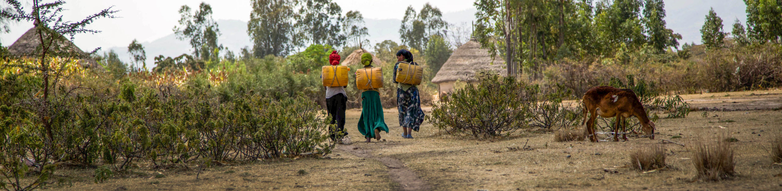 Women carry water back to their homes in Wolgeba village in Halaba Zone, Ethiopia. Like many villages in the Zone, Wolgeba is known for its water shortages. UNICEF supports the local government to provide water to the rural communities. © UNICEF Ethiopia/ 2015/Tesfaye