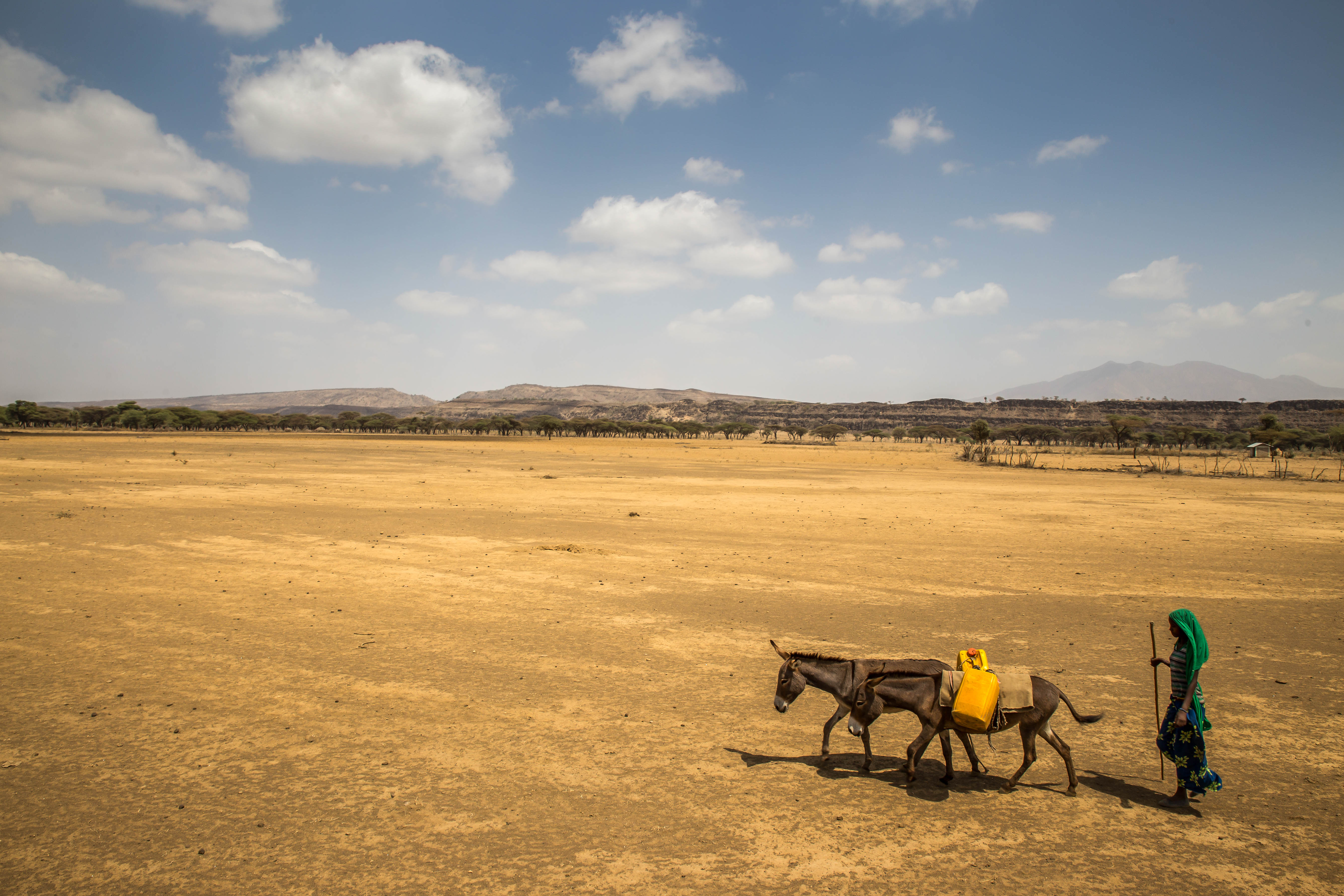 Woman walking with donkeys carrying water during drought in Ethiopia. Credit: Ayene, UNICEF Ethiopia